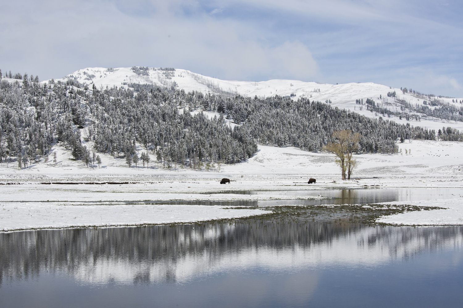 Yellowstone.Winter_JM_29