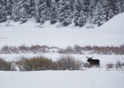 Yellowstone.Winter_JM_33