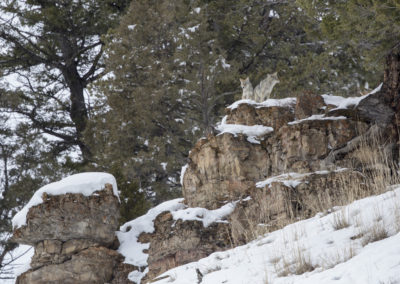 Yellowstone.Winter_JM_35