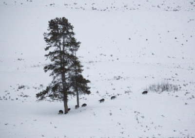 Yellowstone.Winter_JM_41