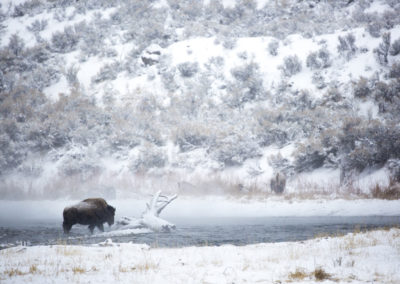 Yellowstone.Winter_JM_9